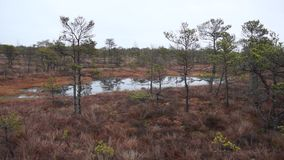 Kemeri swamp landscape stock video footage