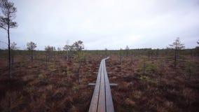 Kemeri swamp landscape stock footage