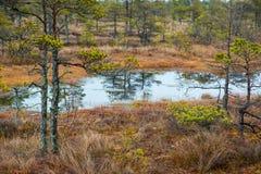 Kemeri swamp landscape Stock Photo