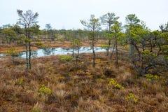Kemeri swamp landscape Stock Image