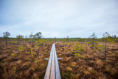 Kemeri swamp landscape Stock Photography