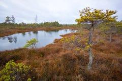 Kemeri swamp landscape Royalty Free Stock Image