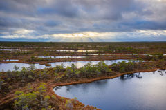 Kemeri swamp landscape Royalty Free Stock Photography