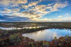 Kemeri swamp landscape Royalty Free Stock Images