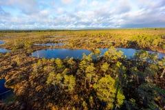 Kemeri swamp landscape Stock Photos