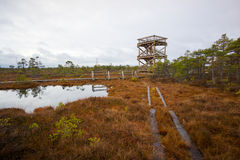 Kemeri swamp landscape Royalty Free Stock Photography