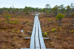 Kemeri swamp landscape Stock Photography