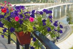 Kemerovo, κιβώτια με τα διακοσμητικά λουλούδια Στοκ φωτογραφία με δικαίωμα ελεύθερης χρήσης