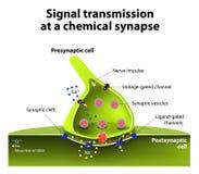 Kemisk synapse royaltyfri illustrationer