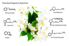 Kemiska vapen kemiska strukturer: sarin tabun, soman, VX, lewisite, senapsgas, tårgas, chlorineJasmine Kemikaliecomen Royaltyfri Foto