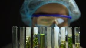 Kemist observera reaktion i rör med växter, utveckling för alternativt bränsle stock video