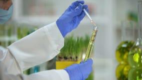 Kemist som tillfogar flytande i rör med växtextrakten, biobränsleproduktion, ekologi arkivfilmer