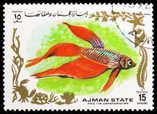 Kemp fish, Tropical Fish I serie, circa 1972. MOSCOW, RUSSIA - MAY 25, 2019: Postage stamp printed in Ajman shows Kemp fish, Tropical Fish I serie, circa 1972 royalty free stock images