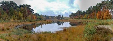 Kempen skog och liten skogsjö i norr Brabant, Netherland arkivfoton