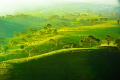 Kemuning-Tee-Plantage Karanganyar Tawangmangu, Solo, Indonesien lizenzfreie stockbilder