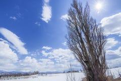 KEN e Mary Tree in Biei Hokkaido, Giappone fotografia stock