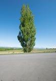 Ken y Mary Tree Foto de archivo libre de regalías