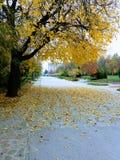 Kenana πάρκων στοκ εικόνες