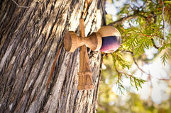 Kendama. Cobra kendama photoshoot Royalty Free Stock Image