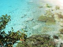 Kenepa海滩 库存图片