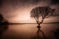 Kenfig drzewo Fotografia Stock