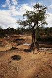 Kenia Fotos de archivo
