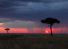 KENIA Royalty Free Stock Photo