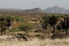 Kenia: Oase in de woestijn van Samburu bij Ngoro-rivier stock foto