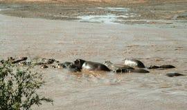 Kenia, Tsavo-het Oosten - Hippo in hun reserve stock fotografie