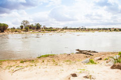 Kenian crocodiles Royalty Free Stock Photos