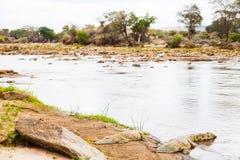 Kenian crocodiles Royalty Free Stock Image