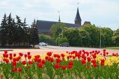 Kenigsberg katedra jest głównym symbolem miasto Kaliningrad zdjęcie stock