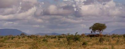 kenijczyka krajobraz Fotografia Royalty Free