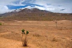 kenijczyka krajobraz Zdjęcia Royalty Free