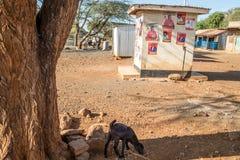 Kenijscy wybory w 2017, Kenja, Afryka Zdjęcia Stock