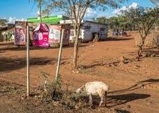 Kenijscy wybory w 2017, Kenja, Afryka Obrazy Stock