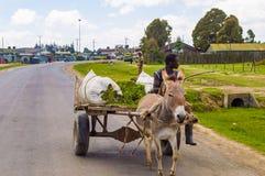 KENJA, THIKA - 03 JANVIER 2019: Młody Kenijski rolnik na drewnianej furze obraz stock