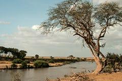 Kenja, Tsavo wschód park narodowy i rzeka - fotografia royalty free