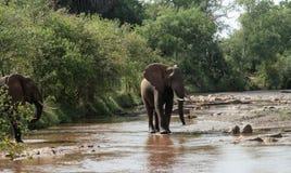 Kenja, Tsavo wschód - słonie w ich rezerwie obraz royalty free