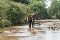Kenja, Tsavo wschód - słonie w ich rezerwie zdjęcie royalty free