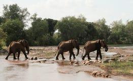 Kenja, Tsavo wschód - słonie w ich rezerwie obraz stock