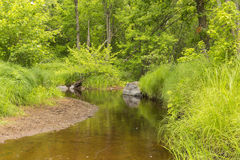 Kennedy Brook. A scenic brook in the woods during summer Stock Images