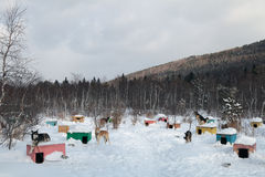 Kennel. A lot of doghouses in the snow. Siberian kennel sled dogs Stock Image