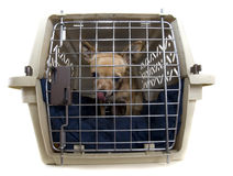 Kennel dog Stock Images