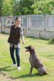 Kennel het vrijwilligers spelen met verlaten oudere hond stock fotografie
