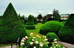 Kennett Square, PA: Longwood Gardens Topiary. Kennett Square, Pennsylvania - June 3, 2015:  Clipped taxus yew trees in the Topiary Garden at Longwood Gardens Royalty Free Stock Images