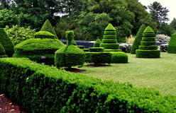 Kennett Square, PA: Longwood Gardens Topiary Trees. Kennett Square, Pennsylvania:  Uniquely clipped taxus (yew) trees in the Topiary Garden at Longwood Gardens Stock Images