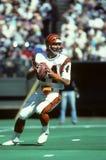 Kenny Anderson Cincinnati Bengals Royalty Free Stock Photo