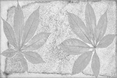 Kennzeichen des Blattes auf der Betondecke Stockfotografie