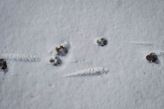Kennzeichen des Tieres Stockbilder